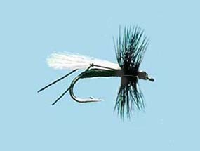 Turrall Dry Winged Hawthorne