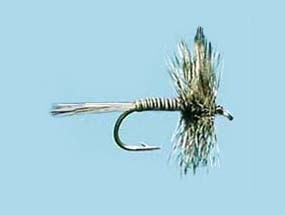 Turrall Dry Winged Mosquito