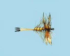 Turrall Dry Winged Panama Femelle - Size 14