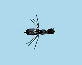 Turrall Terrestrial Black Beetle - Size 14