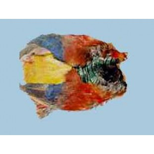 Turrall Golden Pheasant Complete