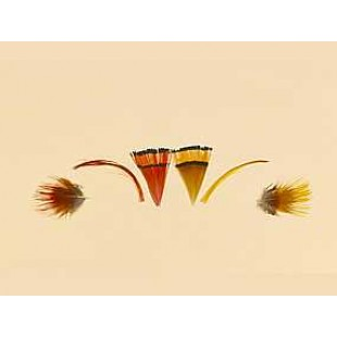 Turrall Golden Pheasant 1grm Packet